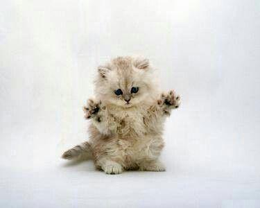 Koťatko bububu