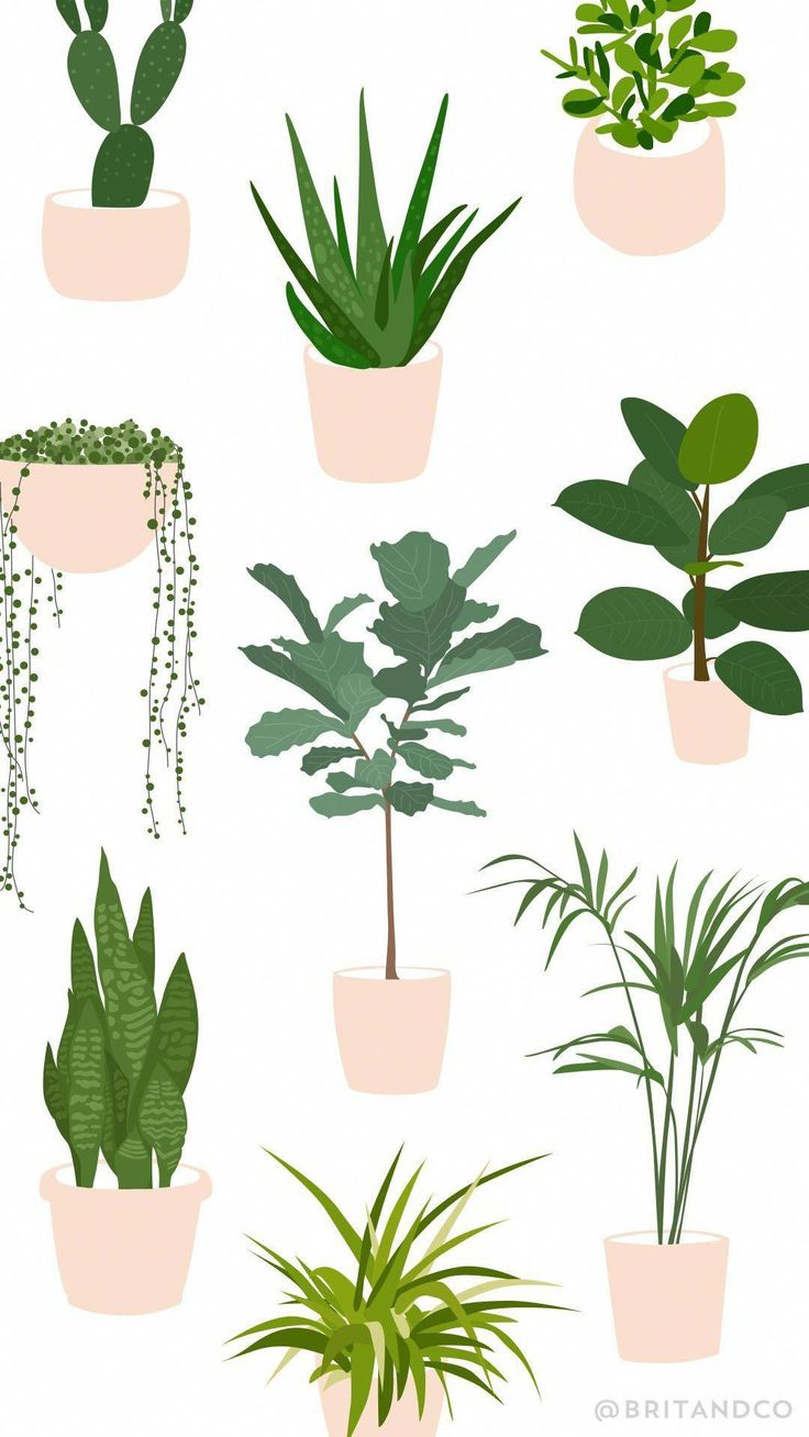 Save This Beginner S Guide To Trendy Indoor Plants To 640 x 480