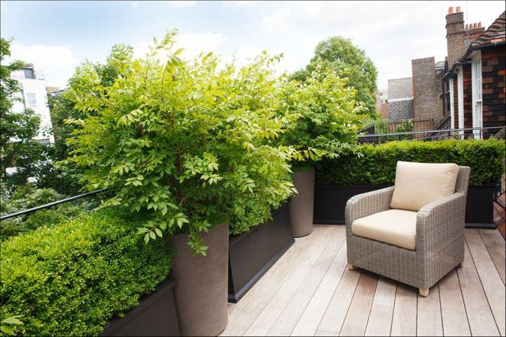 Dachterrasse mit Holzdielen und kleine Hecke als Sichtschutz