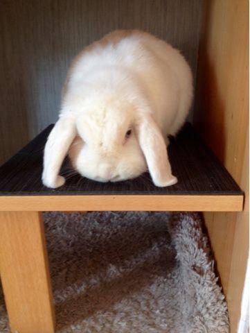 Rabbit hut  do your own rabbit hut recicle furniture  gaiola de coelho personalizada jaula de conejo