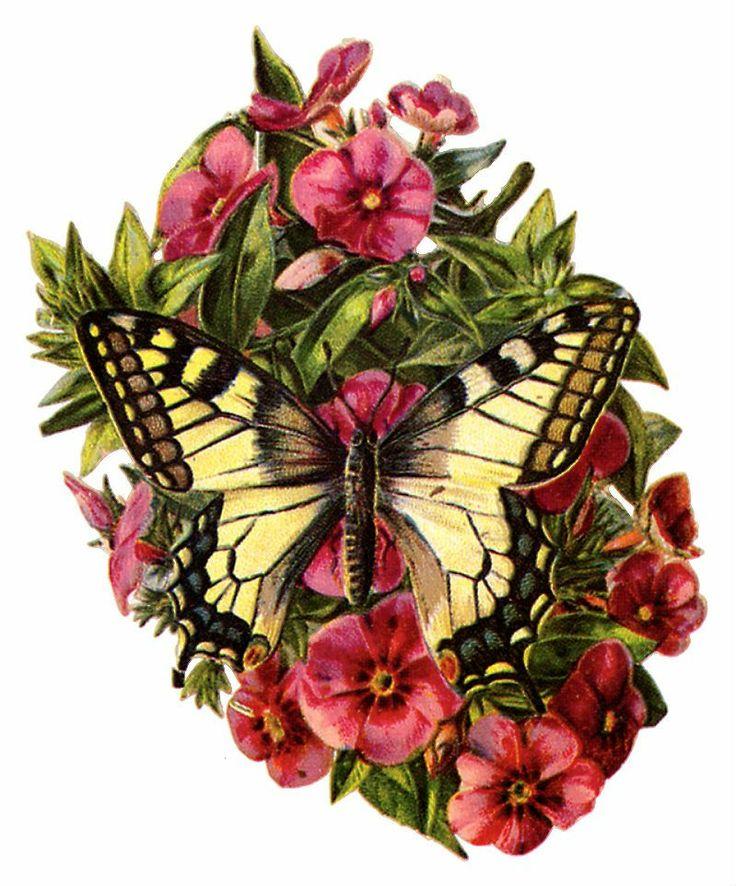 Открытка бабочка и цветок