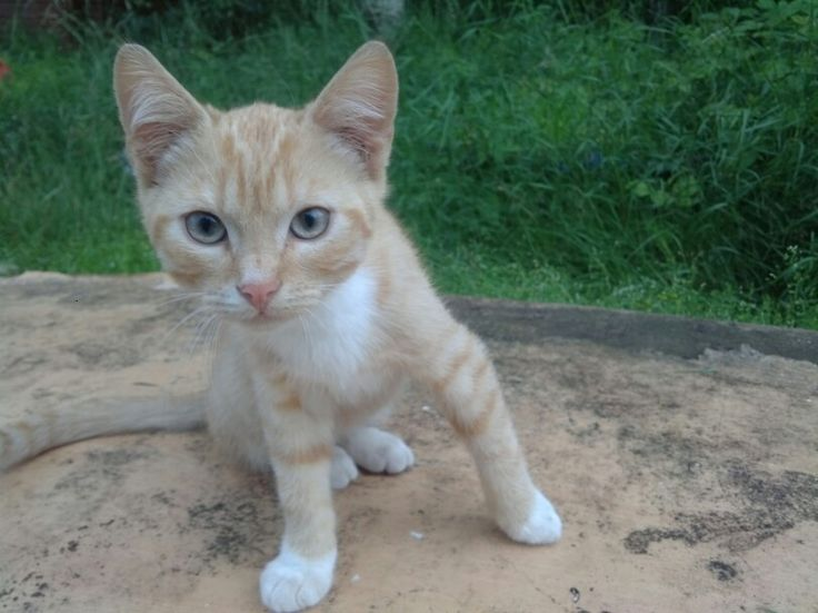 Kissa2