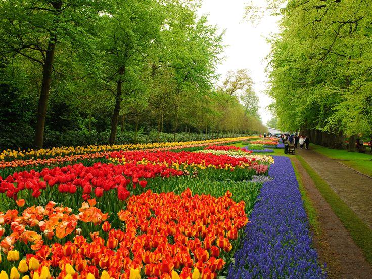 Flower Garden Wallpaper flower gardens pictures | niederlande keukenhof flower garden