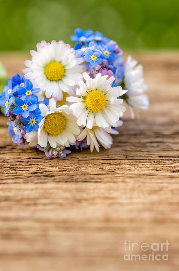 daisy and forget me not bouquet - Google Search | artsy ...