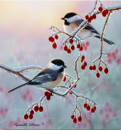 Cobane Studio: Jewels of Winter  16 x 16 (inches) print size  wrapped canvas Giclee Print; chickadee; copyrighted artwork