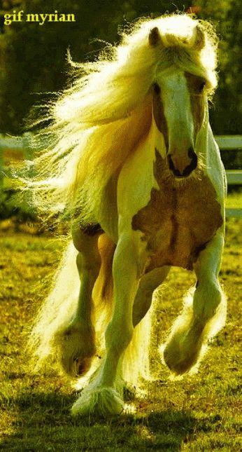 Rende paard