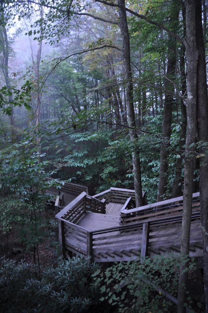 Foggy Morning in New River Gorge | West Virginia (by Scott Cochran)