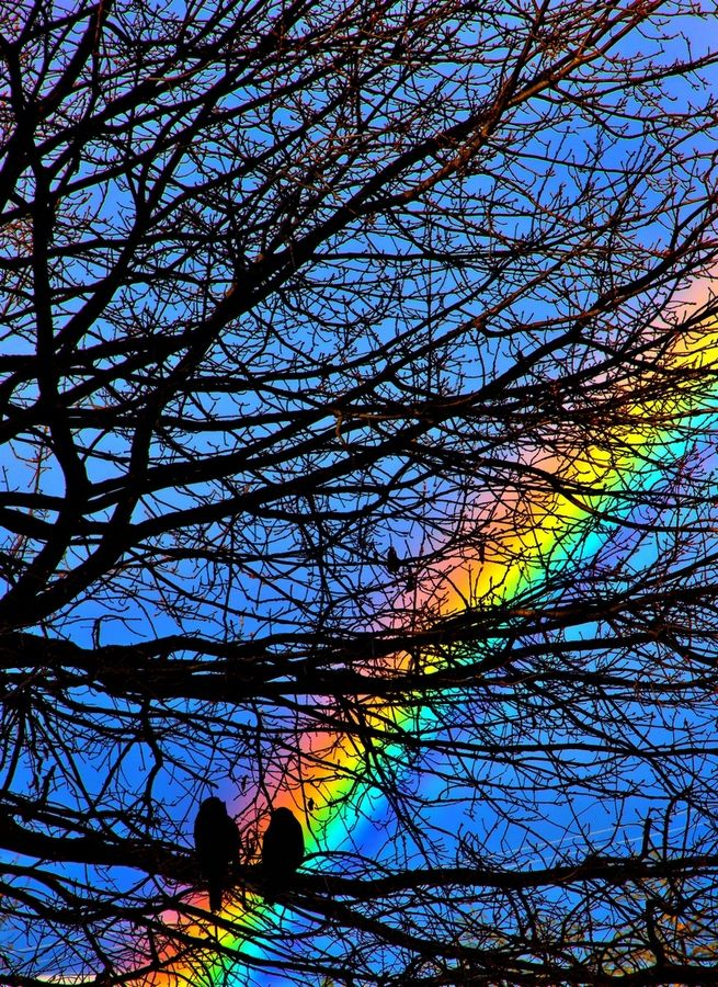 Rainbow tree by Albin Bezjak, via 500px