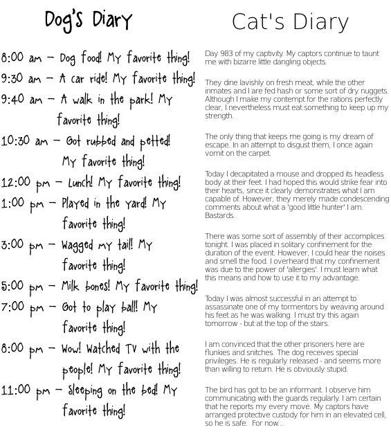 Cat Vs Dog Diary Entry