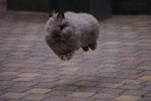 Hover Bunny - February 1, 2012