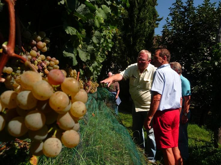 Weinverkostung im Ansitz Kränzel