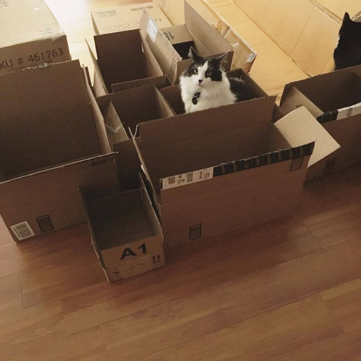 We buy them all the toys and heated cat beds but in the end they still prefer boxes http://ift.tt/2rZXCfC