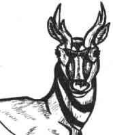 Antilope -  Verstandig handelen is de boodschap van de antilope.  Hij kent de kringloop van het leven en het mysterie van leven en dood.  Daarom kan de antilope oprecht en onbevreesd optreden.  De kracht van de antilope wordt nagestreefd door medicijnmannen.