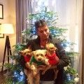 Simon Cowell's dogs on the LoveKnitting blog