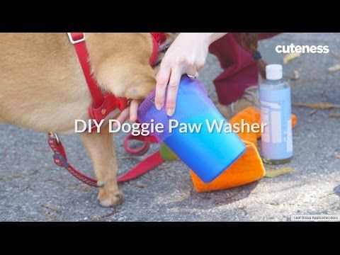 10 best psychiatric service dog images on pinterest psychiatric how to make a portable dog paw washer cuteness solutioingenieria Gallery