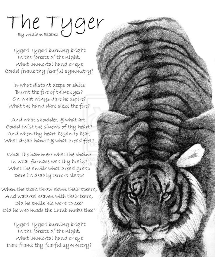 "an analysis of the book the tyger by william blake ""the tyger"" two poems by blake ""the tyger"" cont'd and what shoulder ""the lamb"" and ""the tyger"" author: kelsey, lynne."