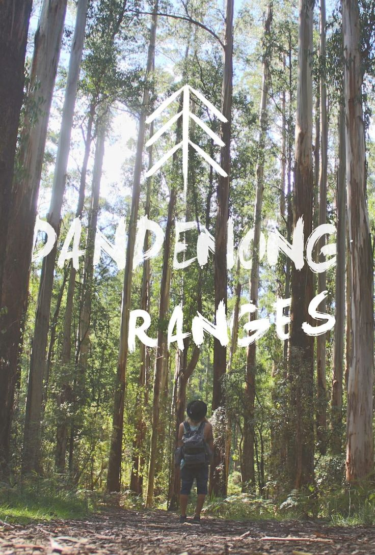 Dandenong Ranges: The Best Day Hikes Near Melbourne - Lost Boy Memoirs | Travel and Adventure Blog