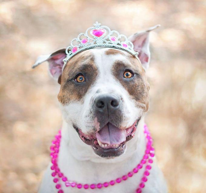 10 Mejores Imágenes De Cachorros Pitbull En Pinterest