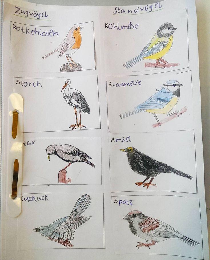 Die ersten und zweiten Klassen sollten Zug- und Standvögel nach einer Echtfotografie ausmalen. Die meisten haben das wirklich gut hingekriegt! Hier mal ein Beispiel 😊