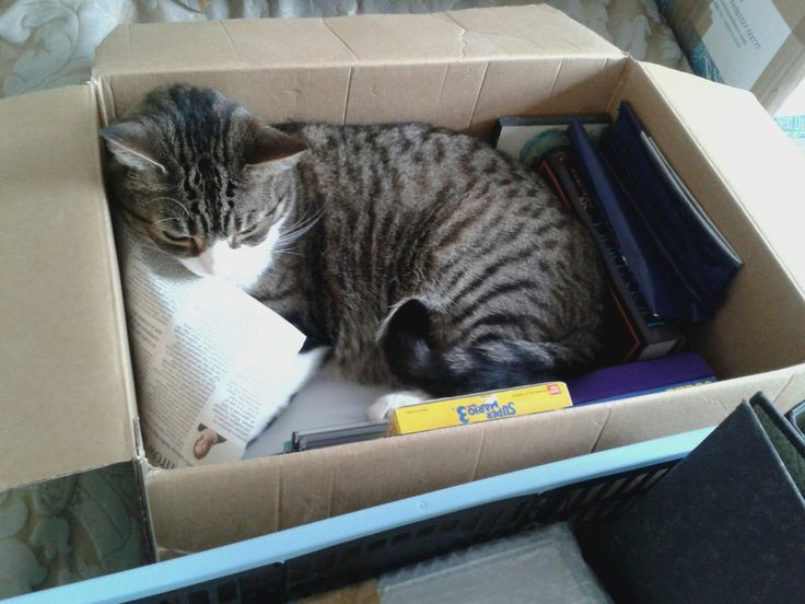 Cats. Boxes. Nuff said.
