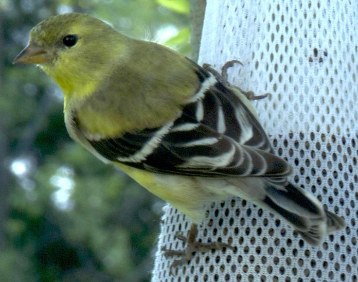 Northern Virginia Bird Photography Tips - Common Mistakes ...