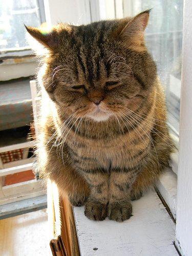 猫「つらいことがあった」01