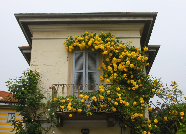 The balcony of yellow roses by Pasqualina Spaccavento on 500px