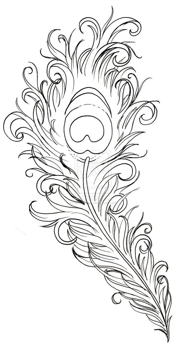 Coloring pages starfish intermediate - Peacock Feather Coloring Page