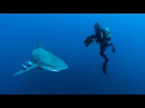 Beautiful Ocean Video celebrating World Ocean Day 2013 with wonderful music.  2 minutes