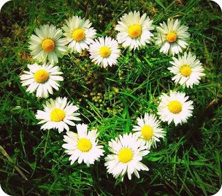 I want the daisy in the middle tattooed above my collar bone.