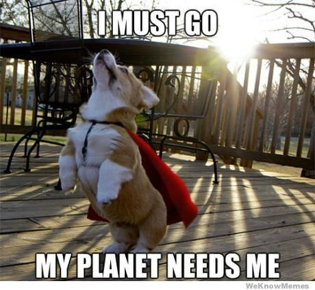 i-must-got-my-planet-needs-me #meme #dog #Puppy #animal #meme #hilarious #funny #Humor