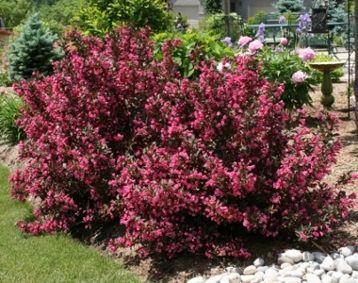 jardines con arbustos