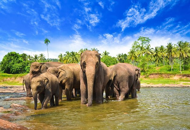 Sri Lanka hopes to draw more travellers with new tourism zones