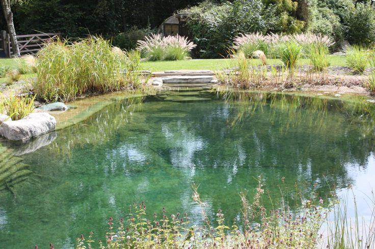 384 best images about natural pools on pinterest swim for Natural garden pond design