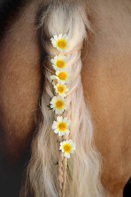 I know this is a horse tail, but it reminded me of our trip to Ecuador in 1994.  There was a lady on the trip with us that had beautiful long red/blonde tresses.  She gathered wildflowers several times and braided them into her hair.  It was such a lovely thing to see.