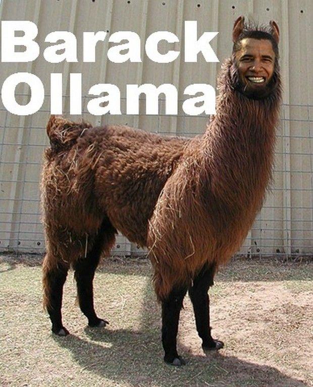 Vitamin-Ha – It's a Llama Dude!