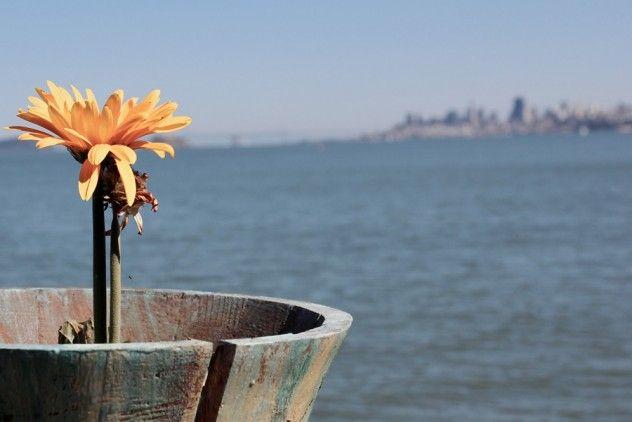 #SanFrancisco #travel #flower #photography #melbaaros