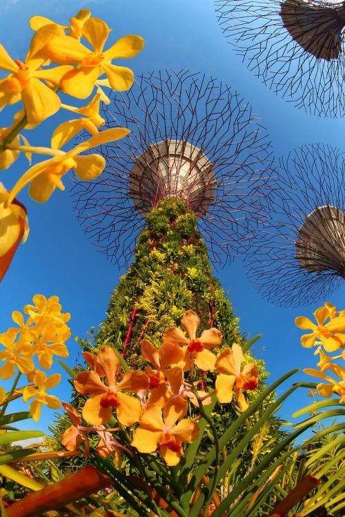 Garden By The Bay Flower Show 18 best futuristic gardenthe bay in singapore. images on