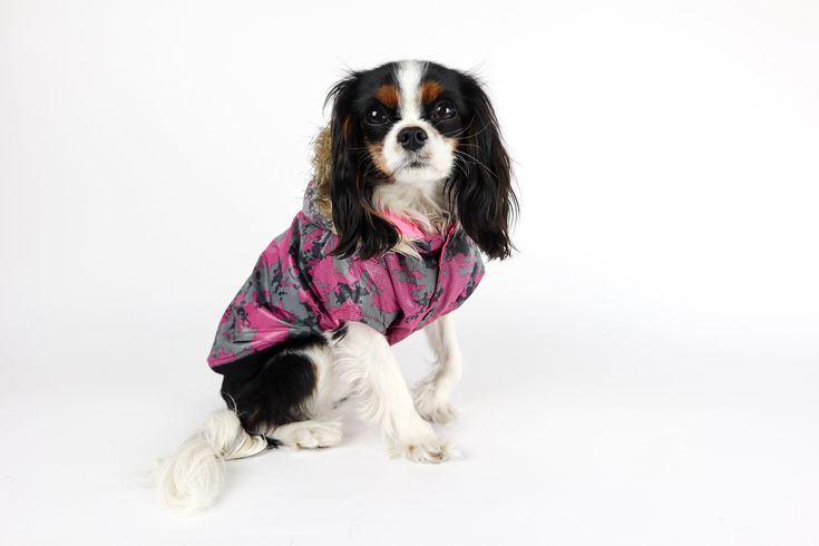Reversible Dog Parka Jacket With Images Dog Parka Dog Clothes