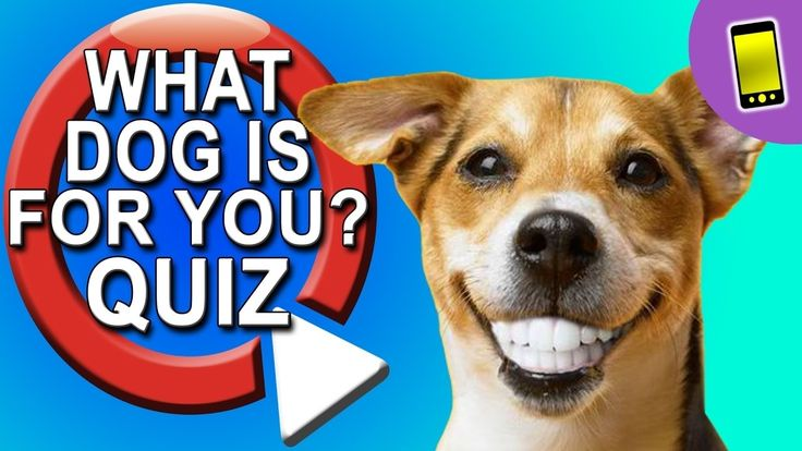 What Kind Of Dog Should I Get Quiz