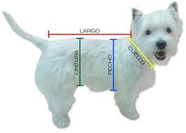 Resultado de imagen para tabla de medidas para perros