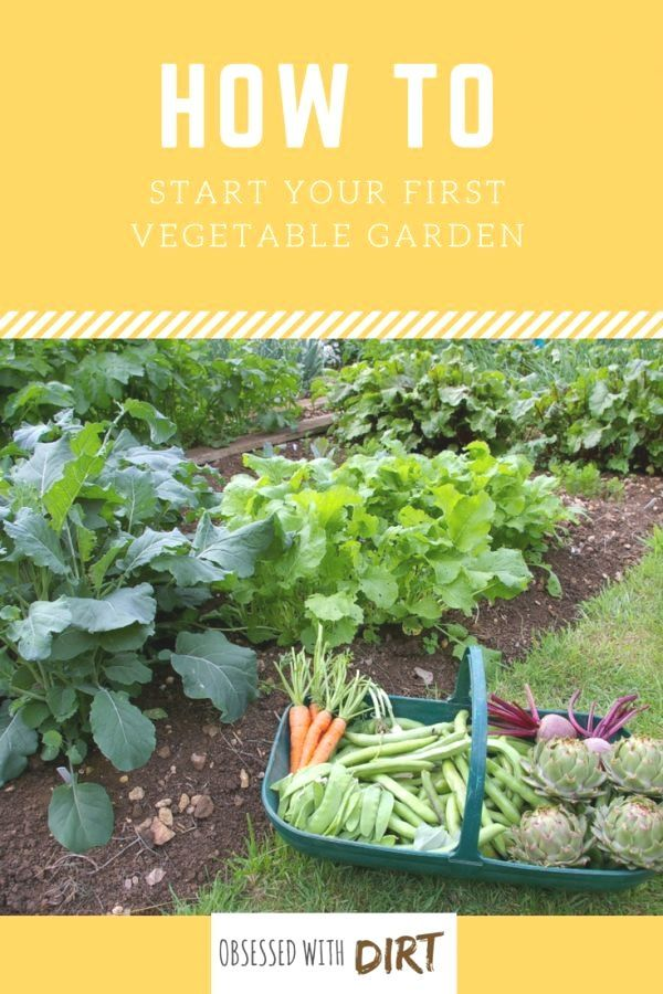 Landscape Vegetable Garden Design With These Ideas Quick Tips And Examples In 2020 Vegetable Garden For Beginners Gardening For Beginners Organic Vegetable Garden