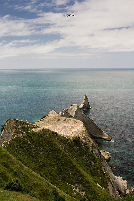 Saddle Colony, Cape Kidnappers, Hawkes Bay, New Zealand