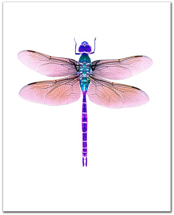 Dragonfly art,  Giclee print. 8 x 10. violet. purple. Dragonfly watercolor painting. Original design.  Archival print. Dragonfly art.