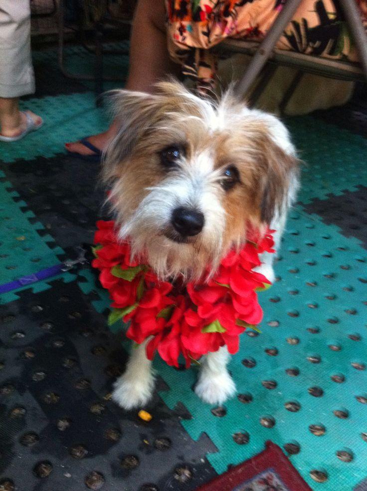 Hawaii 5 O