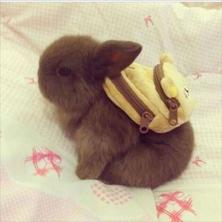 かわいいウサギ12