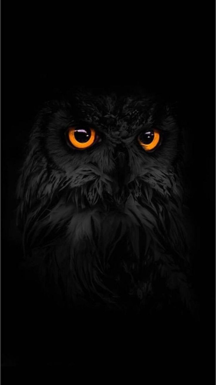 Android Wallpaper Auto In 2020 Owl Wallpaper Owl Pictures Owl