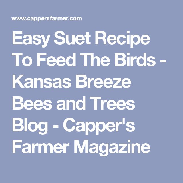 36 best feeding the birdies images on pinterest bird food bird easy suet recipe to feed the birds kansas breeze bees and trees blog cappers forumfinder Gallery