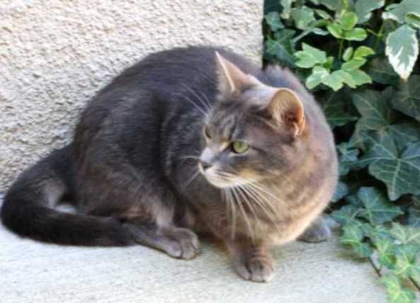 18-below in Toronto today, weather not fit for Man nor beast... and especially not for Brazilian Shorthair cats like Jean Grey.