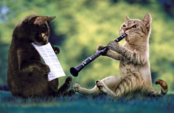omg a clarinet playing cat and his lil buddy holding his